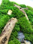 Machový obraz Wood M