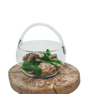 Mini záhrada v skle